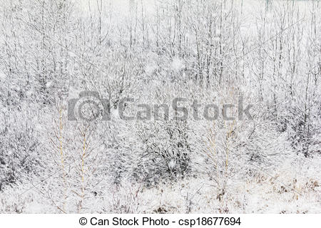 Stock Illustration of thick bush twigs and branches coverd with.