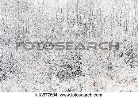 Drawings of thick bush twigs and branches coverd with snow with.