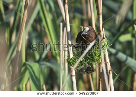 Simon_g's Portfolio on Shutterstock.