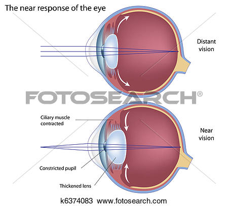 Clipart of The near response of the eye, eps8 k6374083.