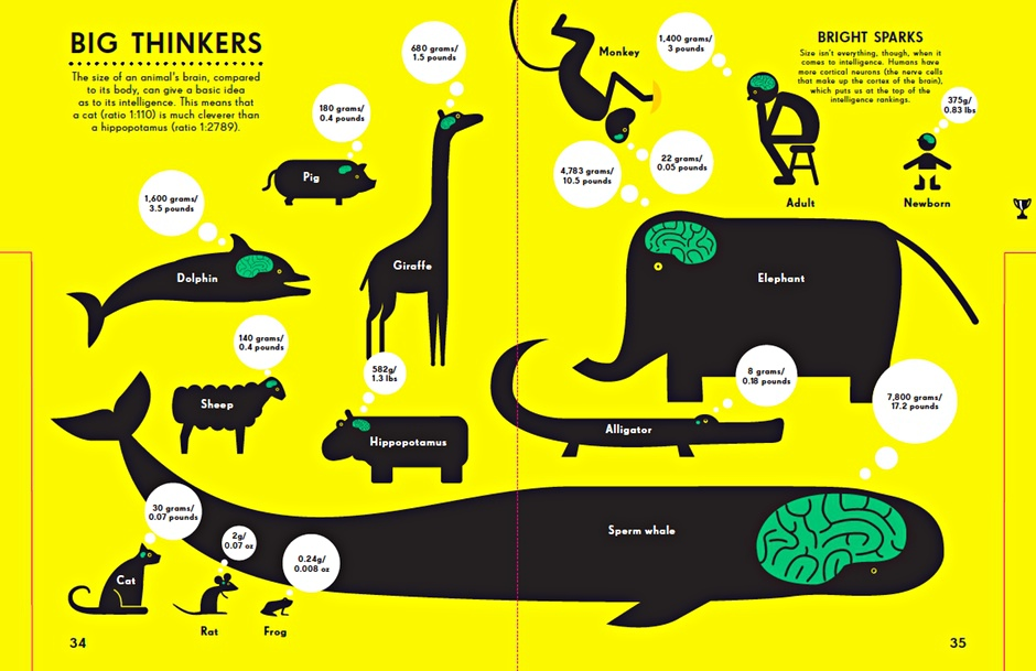 Big Thinkers of the Animal World [Infographic].
