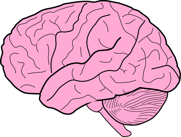 Brain Clipart For Kids Png.