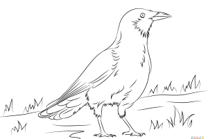 Crow clipart black and white, Crow black and white.