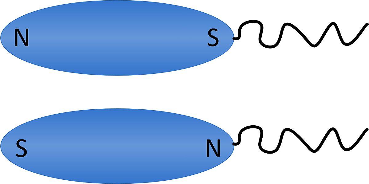 Magnetotactic bacteria.