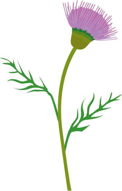 vector art thistle; nice curve to the stem.