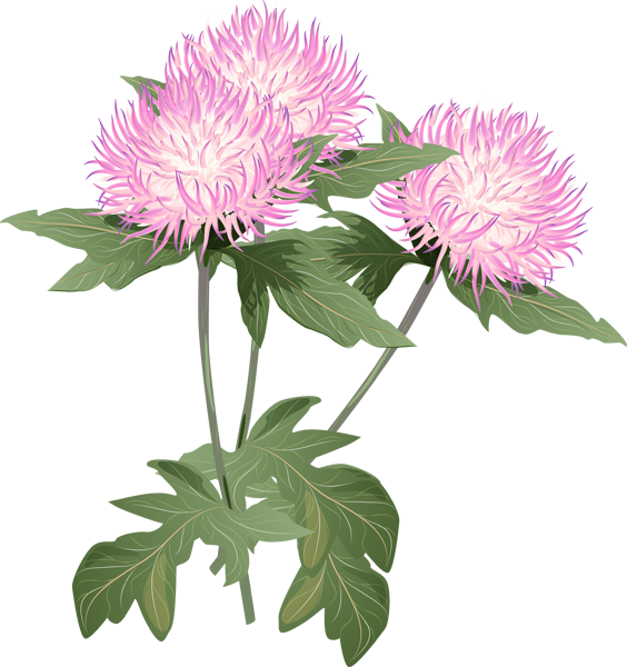 Thistle Flowers Clipart Clipground