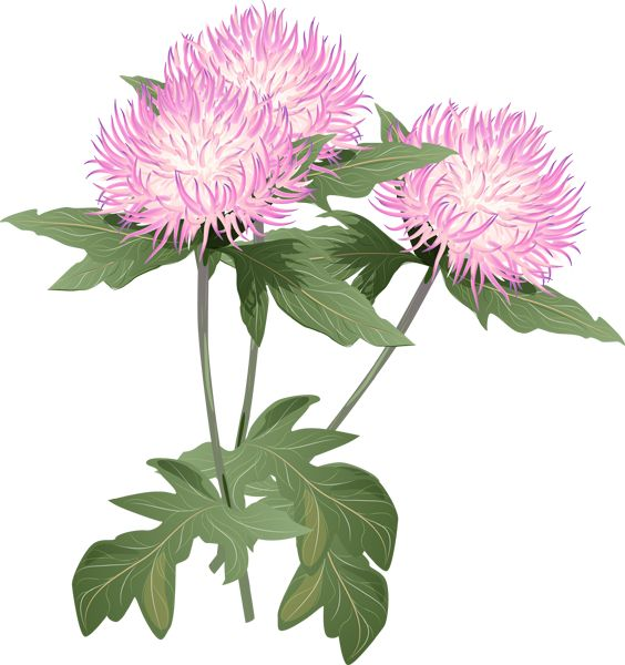 Thistle fluff clipart #13
