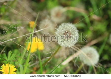 New Flowers Isolated Stock Photos, Royalty.