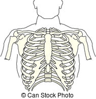 Thorax Stock Illustrations. 2,052 Thorax clip art images and.