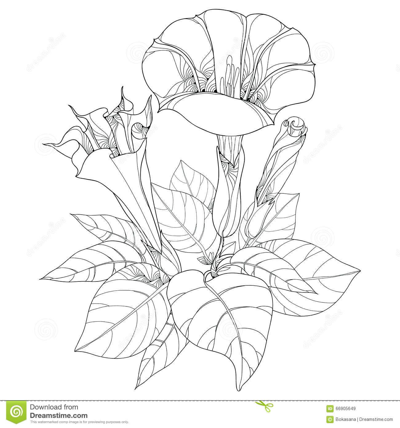 Stem With Datura Stramonium Or Thorn Apple. Poisonous Plant.
