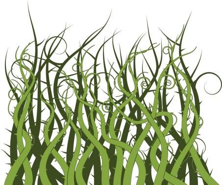 Thorn bush clipart.