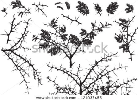 Thorn Bush Stock Images, Royalty.