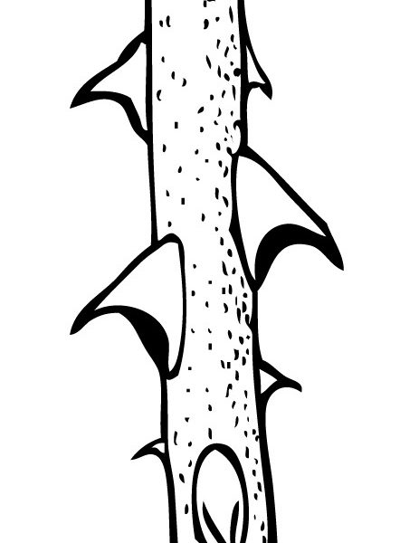 Thorn clipart 1 » Clipart Station.