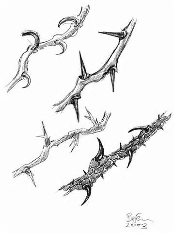 1000+ images about Thorns on Pinterest.