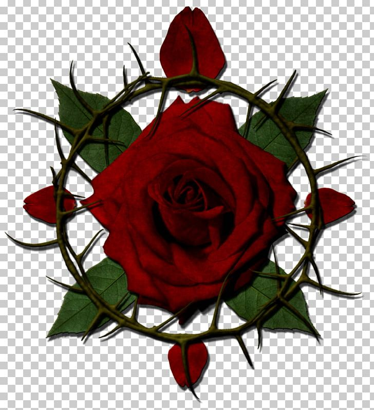 Rose Thorns PNG, Clipart, Black Rose, Color, Crown Of Thorns.