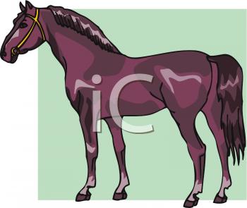 Clipart of An Arabian Horse.