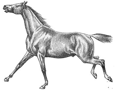 Free Horse Clipart, 3 pages of Public Domain Clip Art.