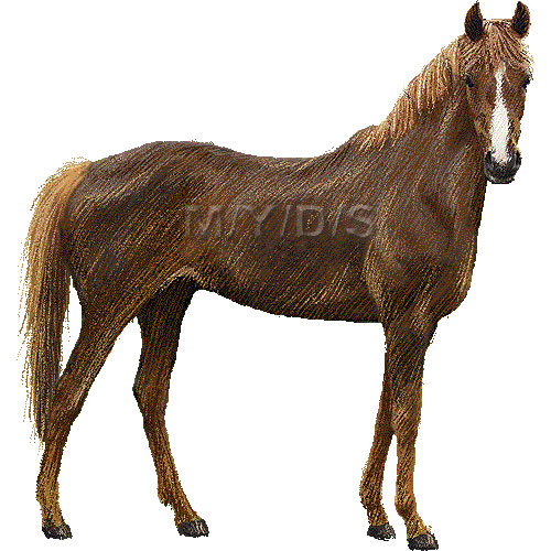 Thoroughbred, Horse clipart graphics (Free clip art.