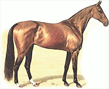 Free thoroughbred Clipart.