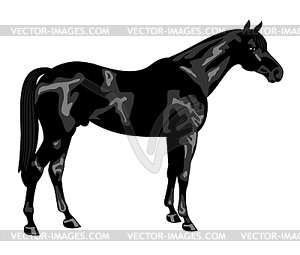 Thoroughbred Horse Clipart.