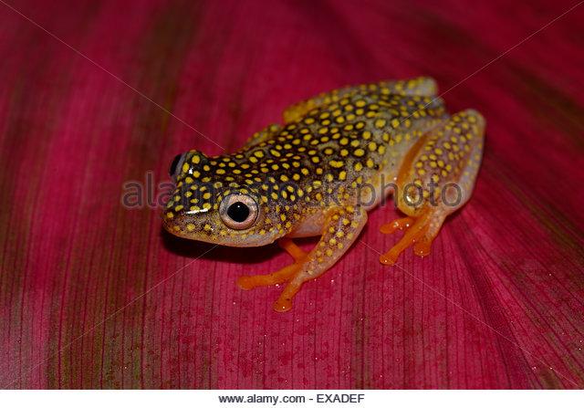 Frog Art Stock Photos & Frog Art Stock Images.