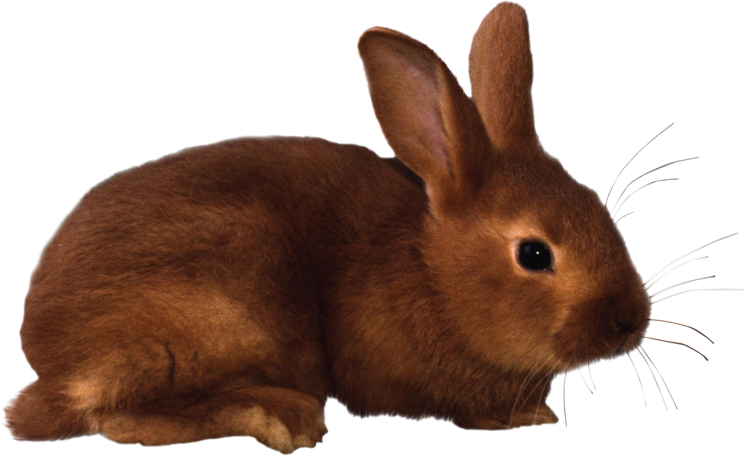 Moving bunny clip art cartoon bunny rabbits clip art images 3.