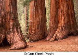 Stock Photo of Three Graces, Yosemite.