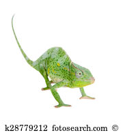 Three horned chameleon Images and Stock Photos. 22 three horned.
