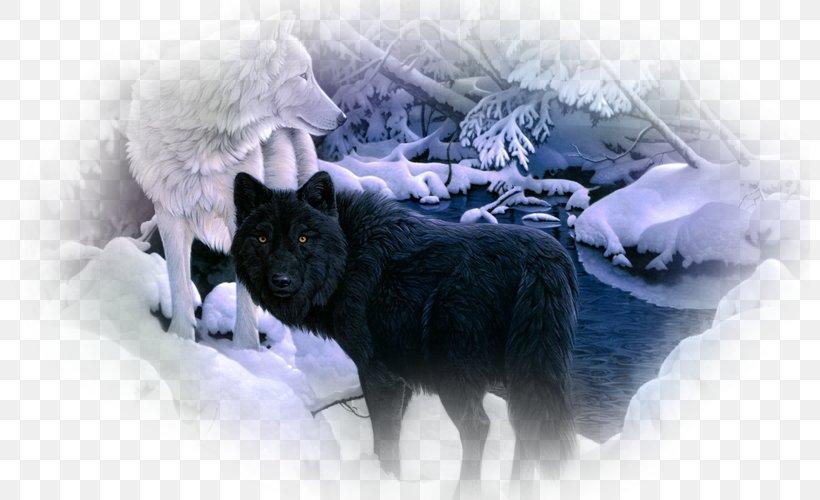 Siberian Husky Arctic Wolf Black Wolf Desktop Wallpaper Pack.