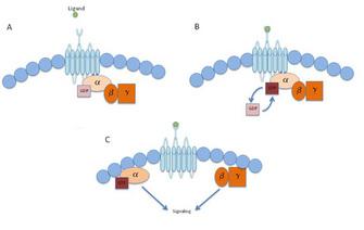 Diabetes, GPCR, Islet cells.