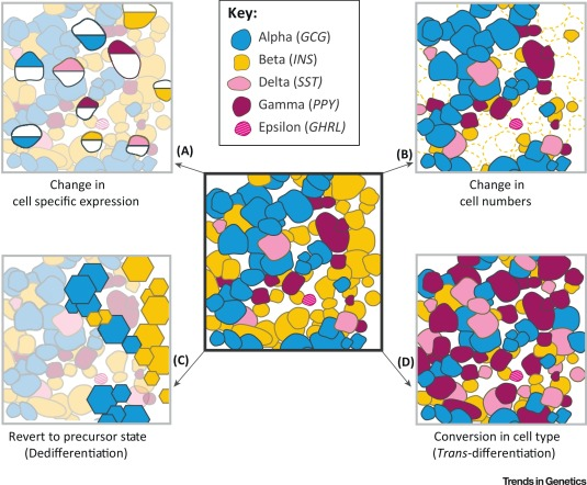 Genomics of Islet (Dys)function and Type 2 Diabetes: Trends in.