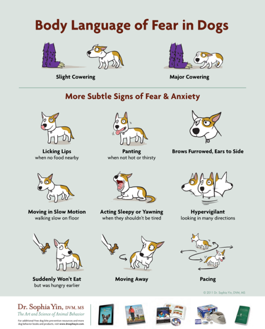 Body Language of Fear in Dogs.