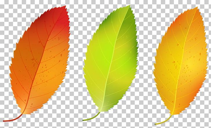 Leaf, Three Fall Leaves Set , three leaves illustration PNG.