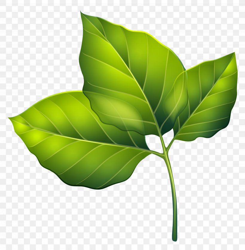 Leaf Green Clip Art, PNG, 4999x5118px, Leaf, Autumn Leaf.