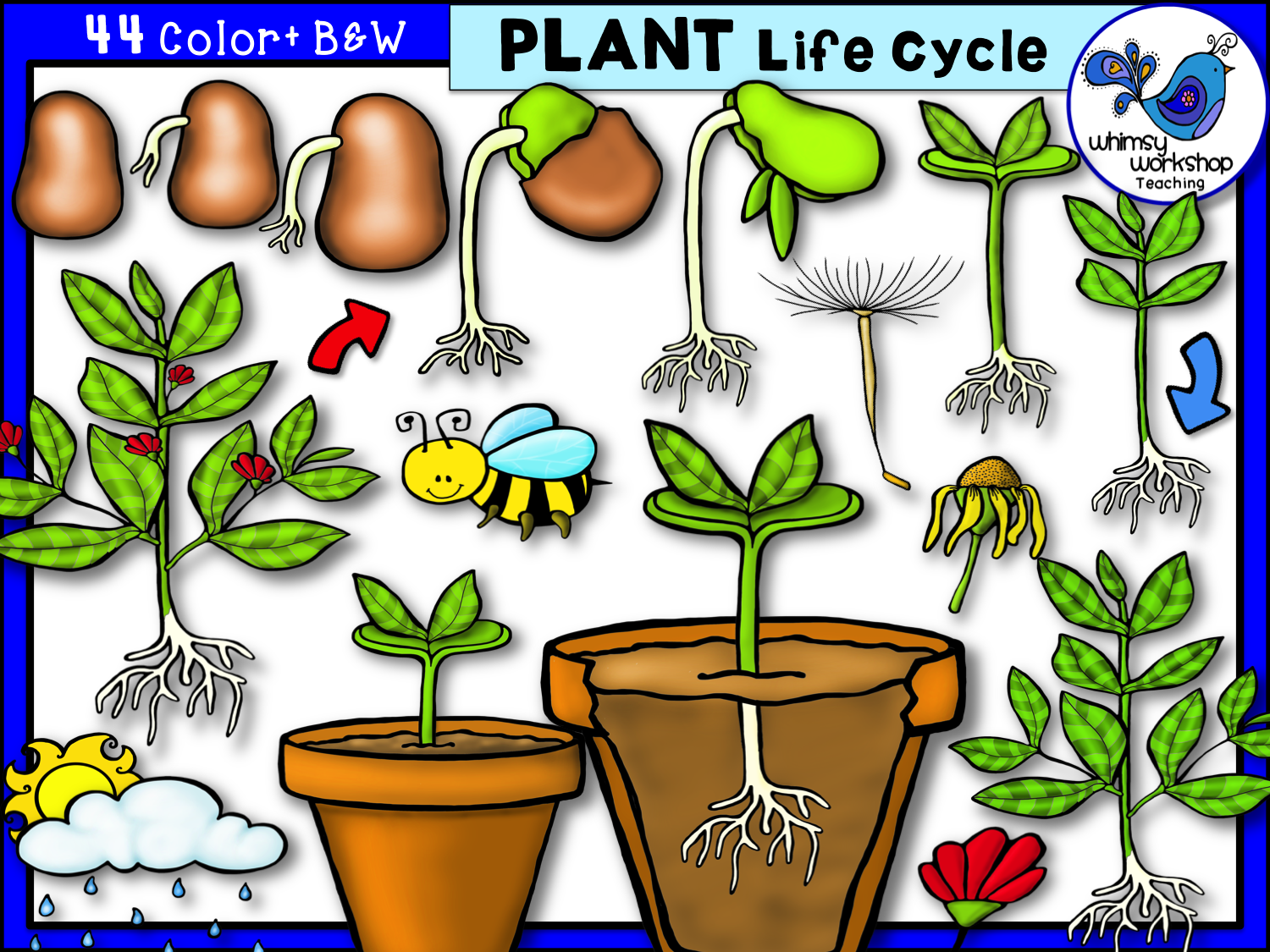 Plant Life Cycle Clip Art.