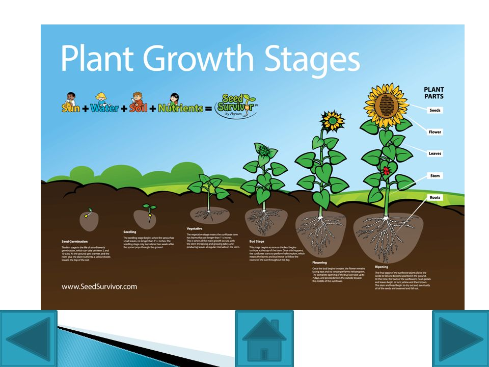 By Group 2. The major stages of the plant life cycle are as.