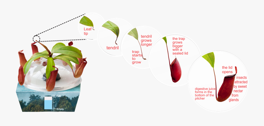 Transparent Plant Life Cycle Clipart.