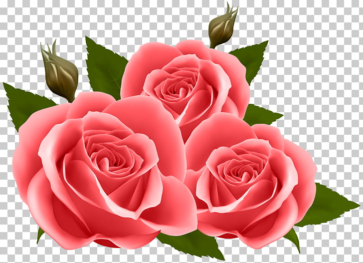 Flower Rose Floral design , Red Roses , three pink roses.