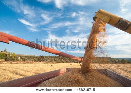 Corn Thresh Stock Photos, Royalty.