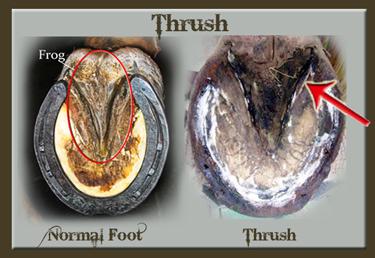 Thrush.