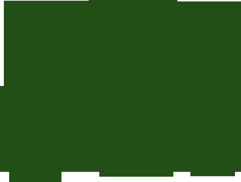 Thuja plicata Sugar & Spice ('De Rakt'PBR).