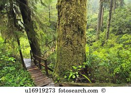 Western red cedar Stock Photos and Images. 233 western red cedar.