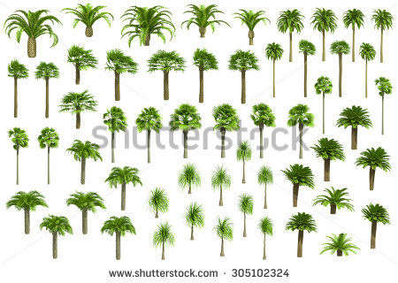 Vector Set Beech Trees Stock Vector 73918252.