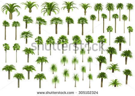 Vector Set Beech Trees Stock Vector 73918252.