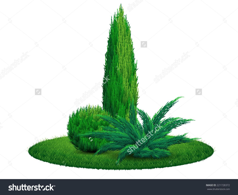 Thuja Tree Juniper Bush On The Grass. Vector Illustration Eps 10.