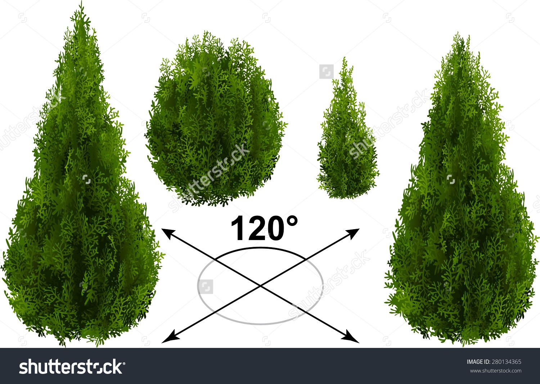 Bush Thuja Isometric Trees Vector Stock Vector 280134365.