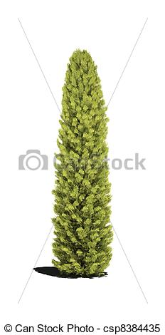 Stock Illustrations of tree thuja evergreen 3d cg csp8384435.