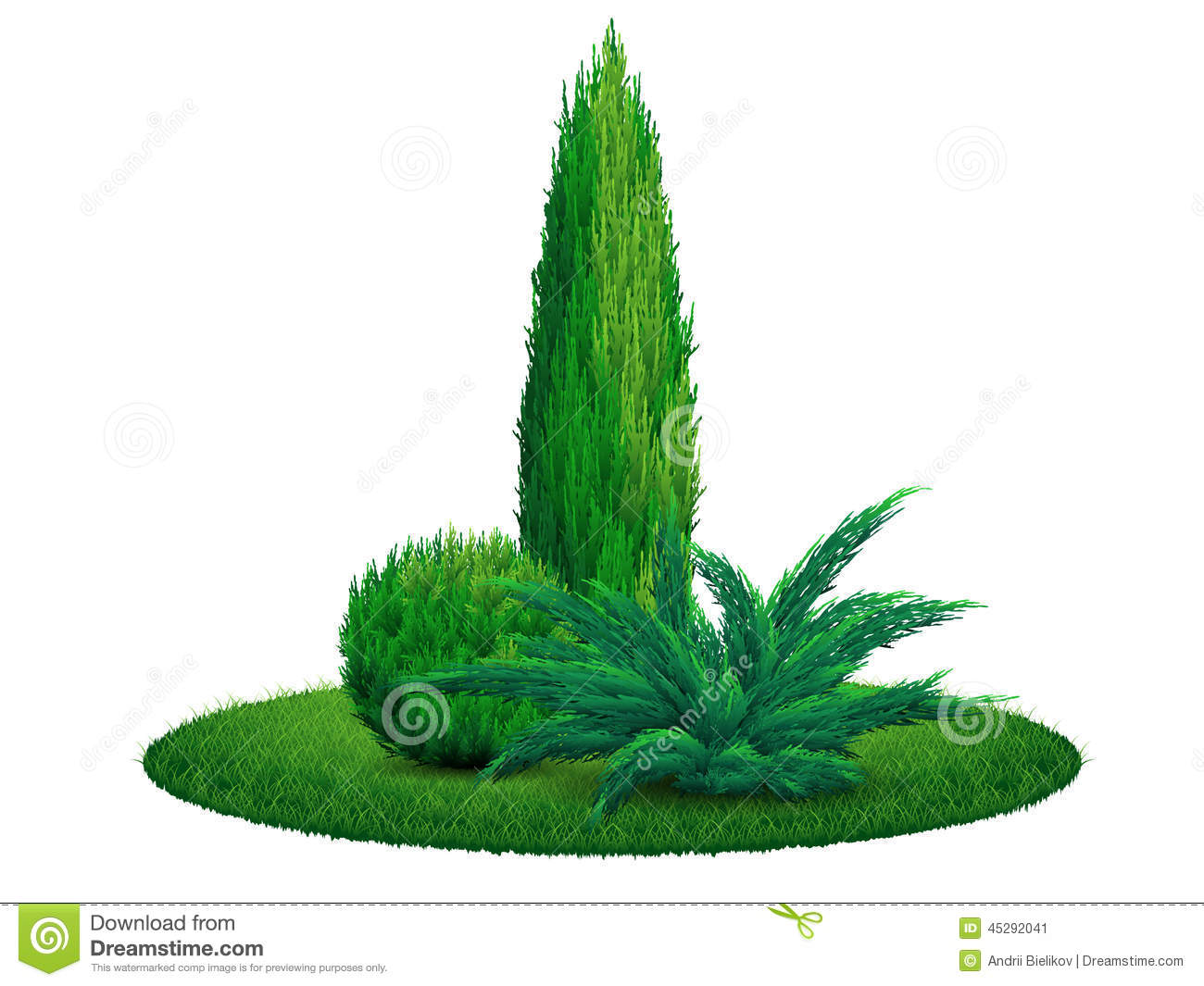 Thuja Tree Juniper Bush On The Grass Stock Vector.