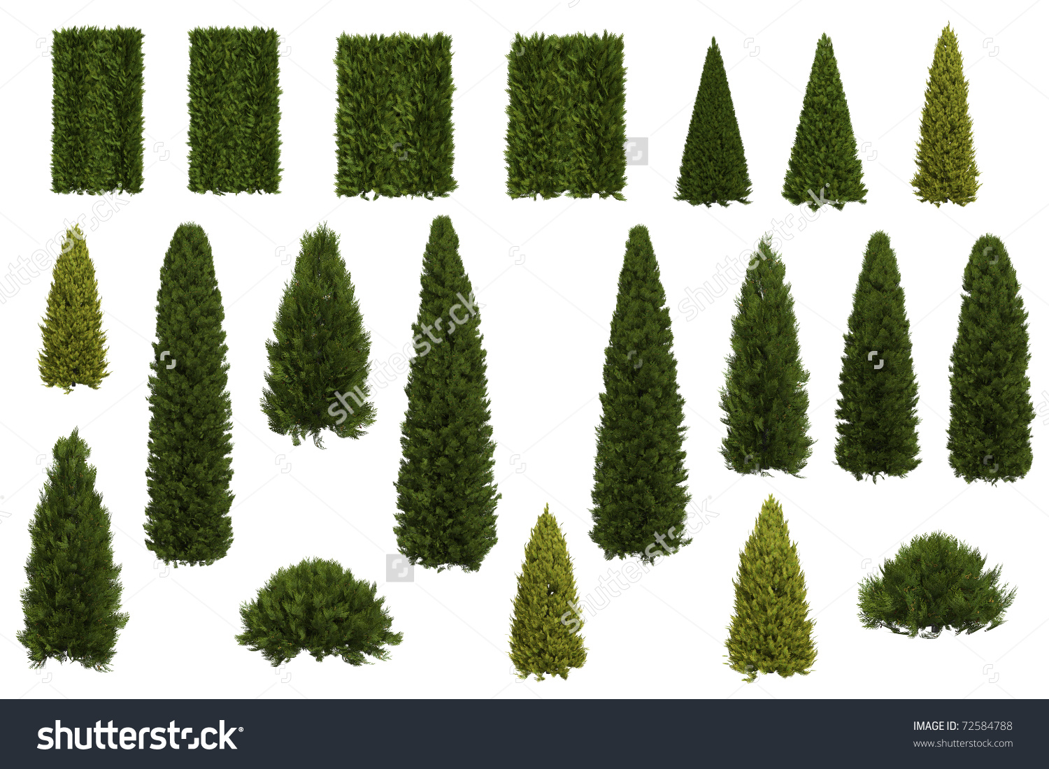 Set Juniper Thuja Trees Isolated On Stock Illustration 72584788.