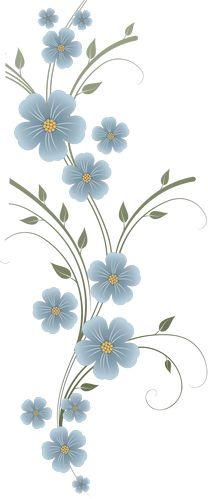 thunbergia illustration.